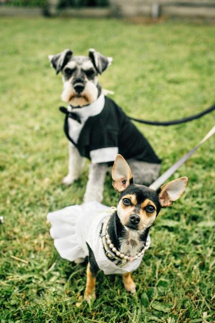 taylorroades-victoria-lawnbowling-wedding.-1-2